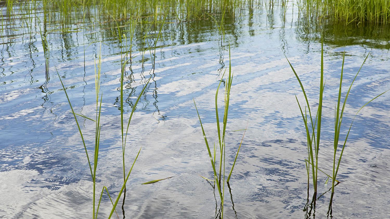 Meet your environmental goals